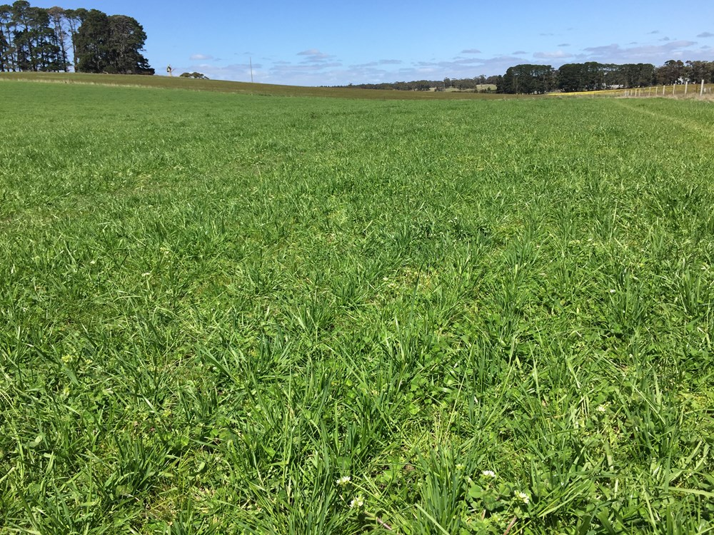SPS Low Rainfall Perennial Blend at Meredith