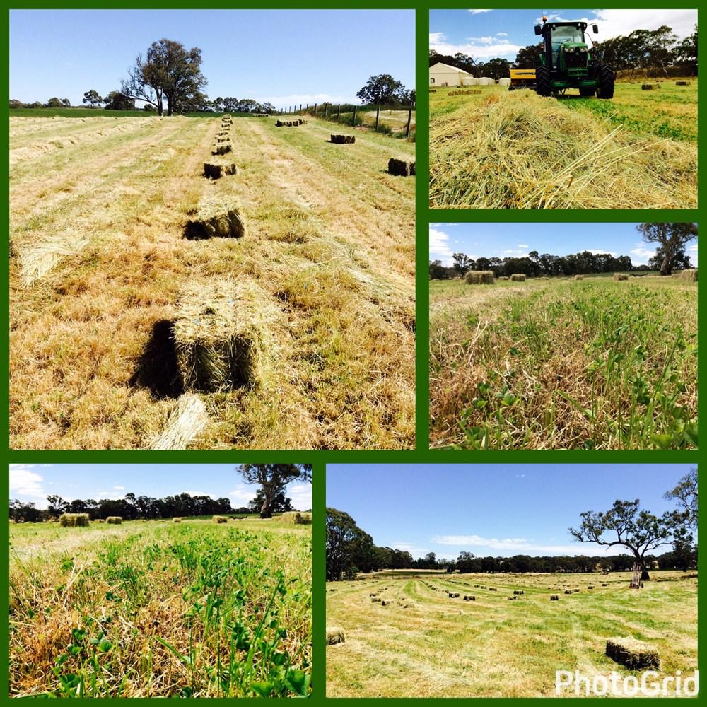 One 50 Ryegrass by Agricom